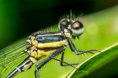 Macro d'insecte libellule en jaune et noir sur une plante en sauvage floue un fond de nature verdoyante