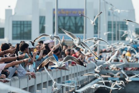 Bang Pu provides habitat for large flocks of migratory seagulls annually in the early winter visitors can enjoy with feeding thousands of seagulls Banco de Imagens
