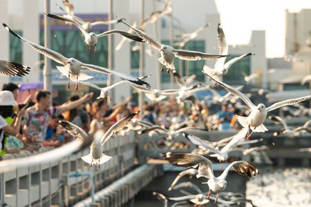 Bang Pu provides habitat for large flocks of migratory seagulls annually in the early winter visitors can enjoy with feeding thousands of seagulls 写真素材