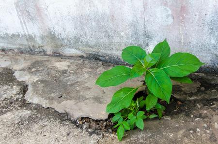sprouts growing on concrete Banco de Imagens
