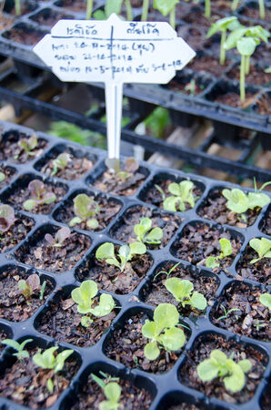 growing sprouts in the tray