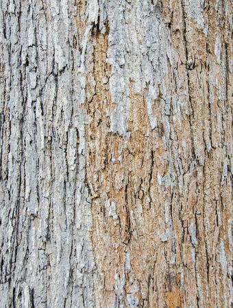 tree bark texture rugged