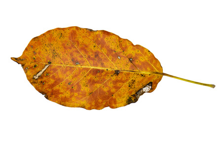 Dry leaf and deterioration isolated on a white background. 스톡 콘텐츠