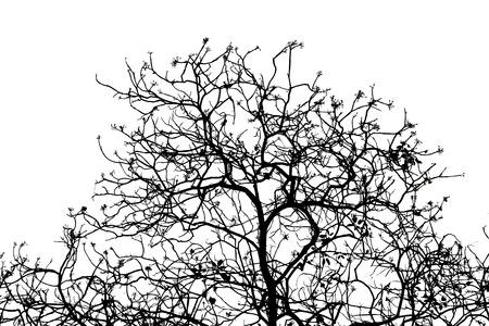Siluetta di rami di albero nudo su sfondo bianco.