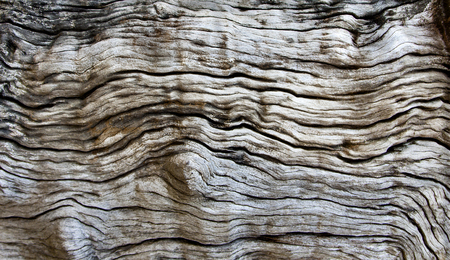 Genuine wood texture background with beautiful patterns. Copy space for your text or image. 版權商用圖片