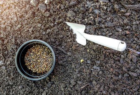 The sand shovel and the seeds on the ground. Fertile soil makes vegetation abundant.