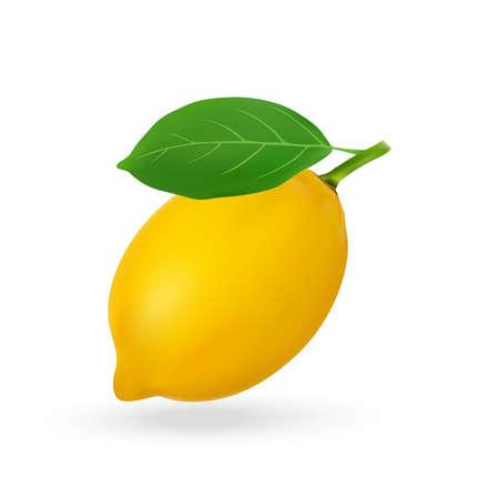 Vector illustration of fresh lemon isolated on white background.
