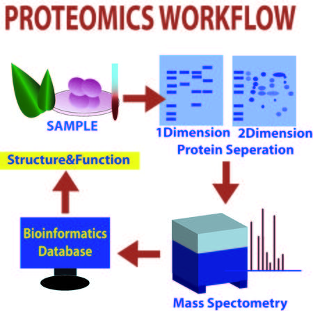 proteomics: Proteomics workflow