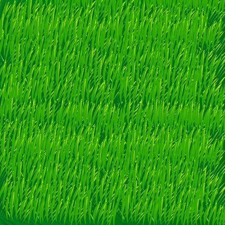 speelveld gras: Zonsondergang in de zomer veld