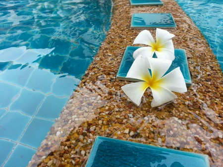 champa flower: Dok Champa flower or flower of Laos. Planted by the pool with a fragrant atmosphere of relaxation.