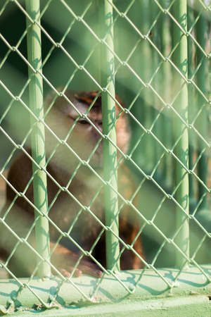 cage gorilla: Sad monkey captured in a zoo