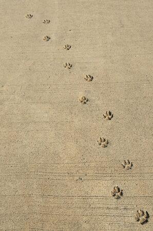 huellas de perro: Huellas de perro en la carretera de concreto Foto de archivo