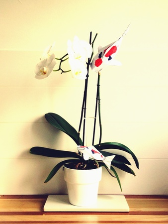 White orchid in pot with koi origami