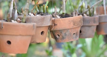 ollas de barro: Las ollas de barro para las orqu�deas Foto de archivo