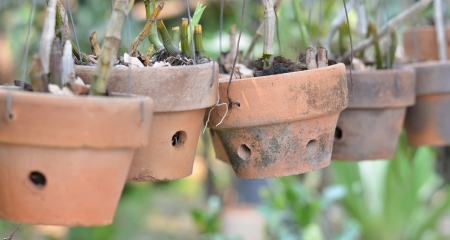 Clay pots for orchids