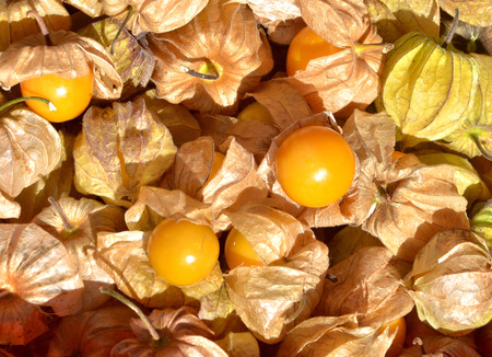 cape gooseberry: Cape gooseberry (physalis) in maket