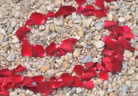 Repeatable rose petals in red photo