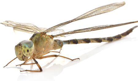 Dragonfly on a white background  Stock Photo
