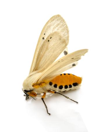 moth  isolated on white background Stock Photo