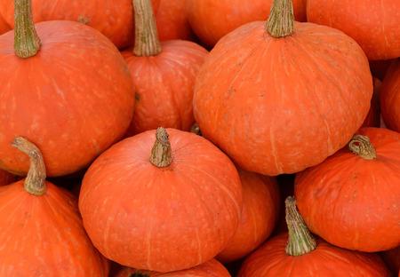 fresh pumpkin on the market Stock Photo