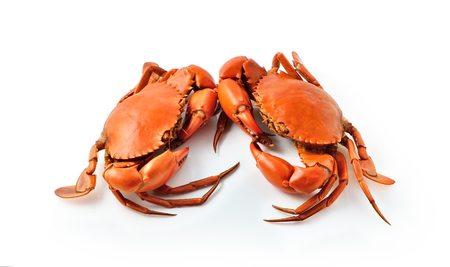 Boiled crabs on white background
