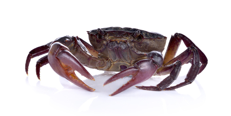 Thai Crab on white background