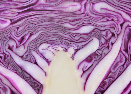 close up texture of purple cabbage Stock Photo
