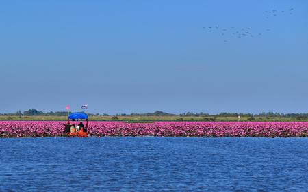 Meer van rode lotus in hoogland Thailand