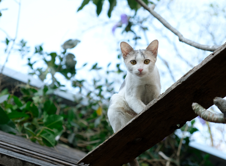 A cat plays On the roof