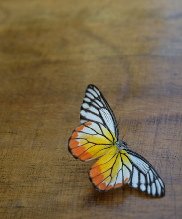 Dead Butterfly on the wood