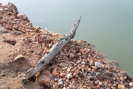 botanics: Old timber that washed up from the forest can be seen after the water subsided.
