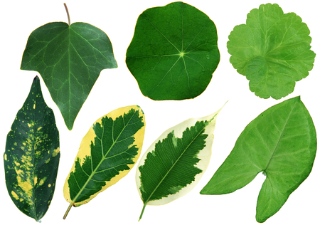 Leaves isoleted on white background Stock Photo