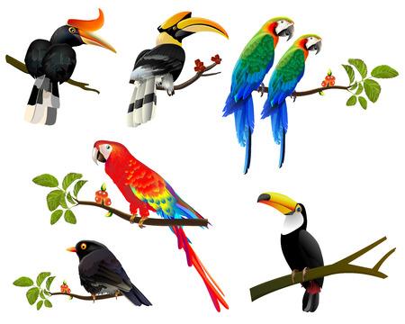 Ilustración tipográfica tropical con aves de plantas tropicales. Diseño vectorial