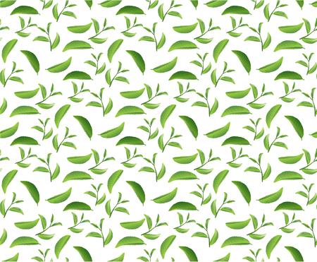 tea leaf patterns seamless backgrounds vectors  イラスト・ベクター素材