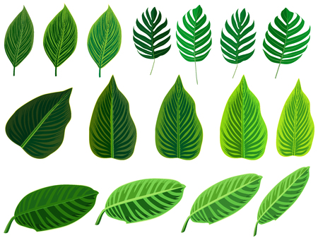 Tropical leaves set. Vector clip art illustration with simple gradients. Each on a separate layer. Illustration
