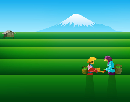 People keep tea leaves green season background.vectors illustration.