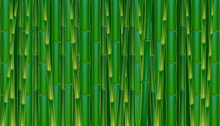 Green bamboo tropical panorama backgrounds vectors  illustration. Vectores