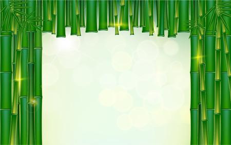 Green bamboo fram tropical backgrounds vectors  illustration. Illustration