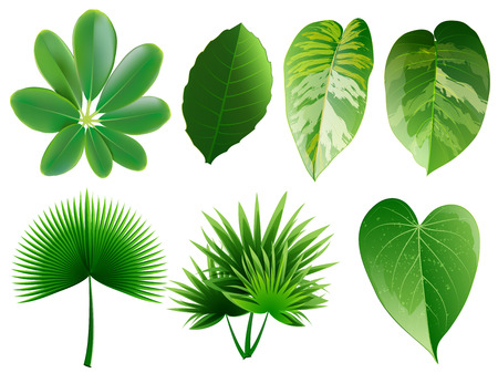 Summer, spring leaves set. Green flat icon. vector, Isolated on white background.