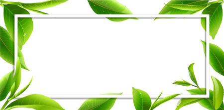 Green tea leaves vector nature background. Green tea background with leaf natural illustration.