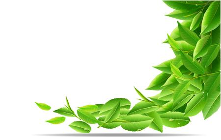 Green tea leaves nature background design.