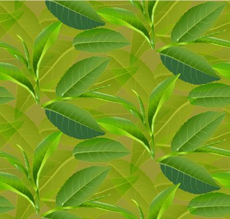 Green tea leaves pattern design Illustration