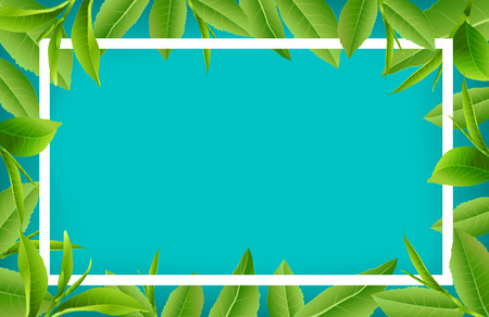 Green tea leaves manu and postcard vector nature background, natural cosmetics and health care products, With place for text, with leaf natural illustration.