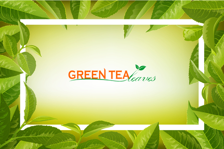 Organic tea frame logo. Green Tea  leaves on Orange background. Business logotype.Design for tea packaging, natural cosmetics and health care products with place for text. Vector illustration. 일러스트
