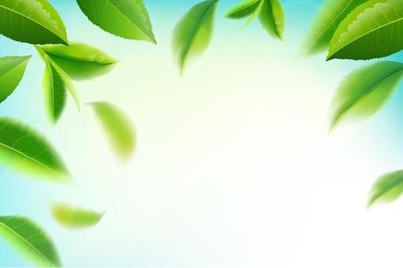 Grüner Tee verlässt manu und Postkarte Vektor Natur Hintergrund, Naturkosmetik und Gesundheitsprodukte, Grüntee Bewegungsbroschüre, Banner, Poster, Vektor-Illustration.