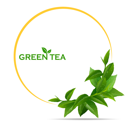 black tea leaves manu and postcard vector nature background, natural cosmetics and health care products, green tea cup brochure, banner, poster, vector illustration.