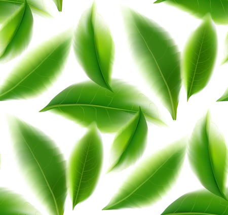 Green tea leaves seamless and postcard vector nature background, natural cosmetics and health care products, green tea motion brochure, banner, poster, vector illustration.
