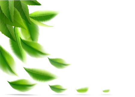 nature leaves green tea on spring  background. Green tea leaves manu and postcard vector nature background, natural cosmetics and health care products, green tea motion brochure, banner, poster, vector illustration.