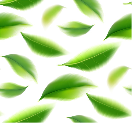 Green tea leaves manu and postcard vector nature background, natural cosmetics and health care products, green tea motion brochure, banner, poster, vector illustration.