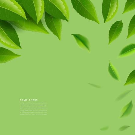 Green tea leaves manu and postcard vector nature background, natural cosmetics and health care products, green tea motion brochure, banner, poster, vector illustration. Vetores